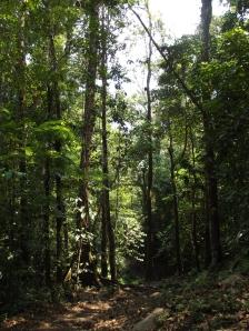 Selva Lacandona (@archivo SIPAZ)