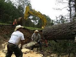 Tala de árboles en los Altos de Chiapas(@cgt)